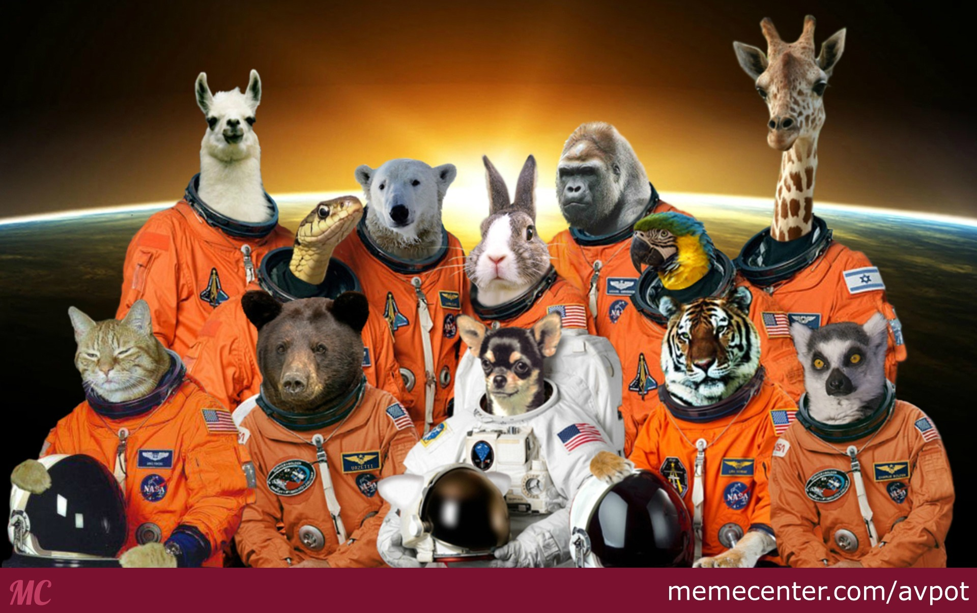 animals in space nasa - HD 1920×1116