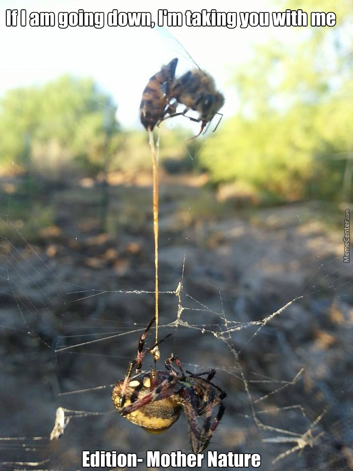 Spider Catches Bee, Bee Stings Spider. Both Dead