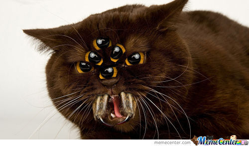 Spider Kitty, Scary Kitty, Six Eyes Upon Its Head; Bitey Kitty, Venom Kitty, Pet It And You're Dead.