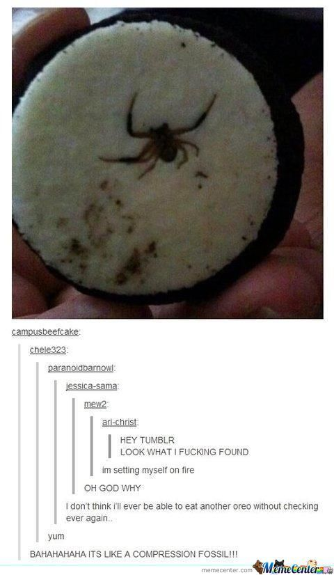 Spiders And Oreos