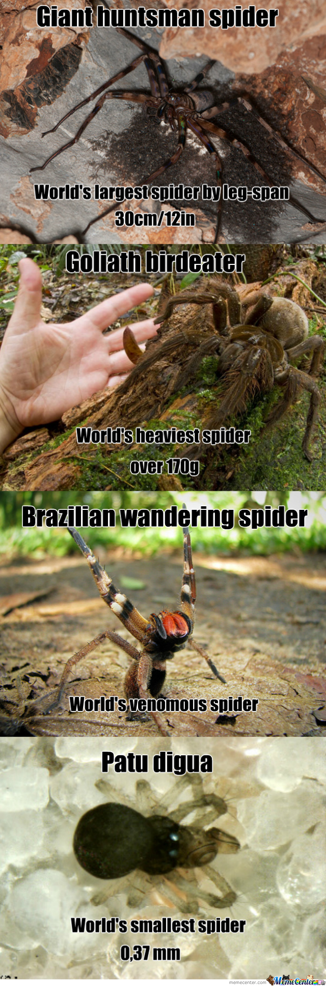 Spiders At Their Finest