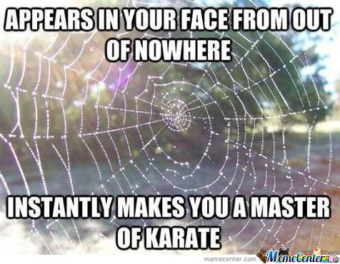 Spider's Web Are Awesome !