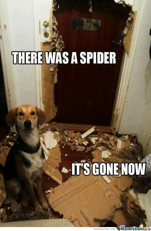 Spiders...