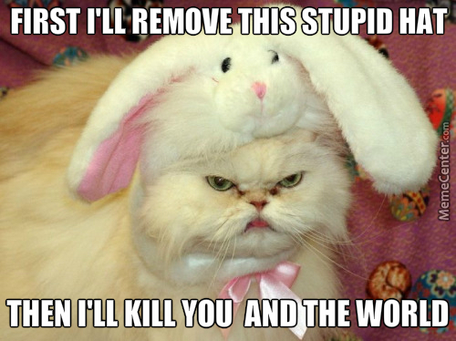 Spotted Another Grumpy Cat With Bunneh Hat.