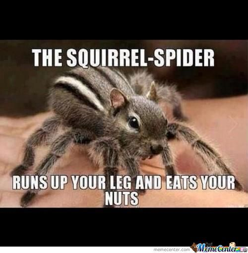 squirrel spider eats your nuts_o_1245747 squirrel spider eats your nuts by shadowgunz21 meme center,Squirrel Meme Nuts