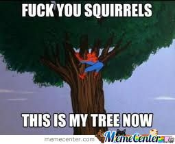 Squirrels, Get The Hell Out Of My Tree