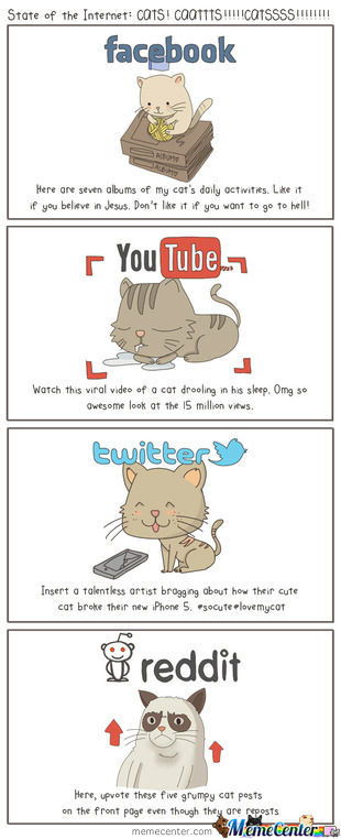State Of The Internet, Cats!