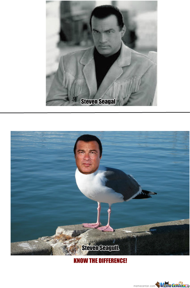 Steven Seagal & Steven Seagull Know The Difference!