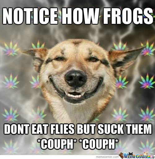 Stoned Puppy Frog