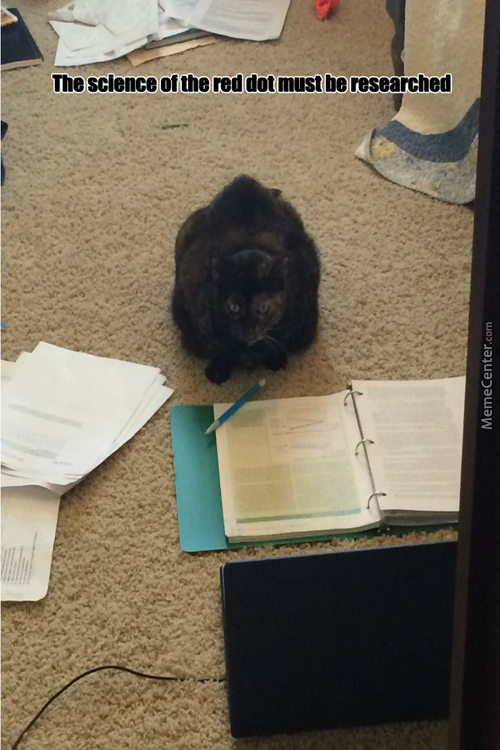 Study Cat Is Studying