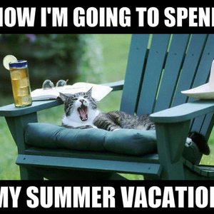 Image result for cat summer meme
