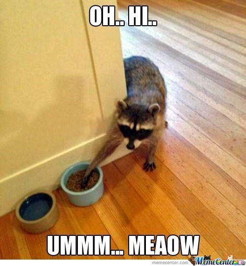 Raccoon Cat Food Smooth Criminal