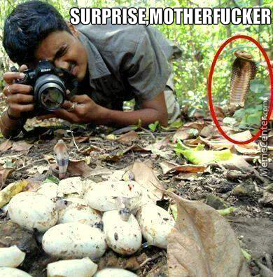 surprise motherfucker_o_3223869 motherfucker memes best collection of funny motherfucker pictures,Surprise Mother Meme