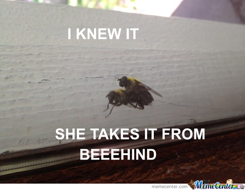Sweet Sweet Bee Sex