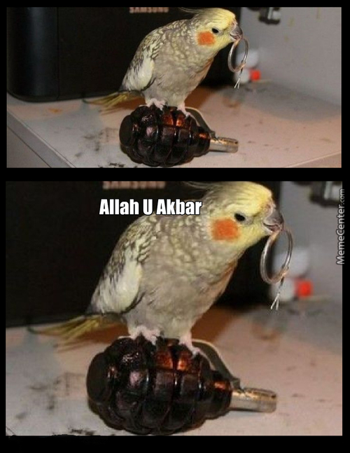 Syrian Birds Be Like :
