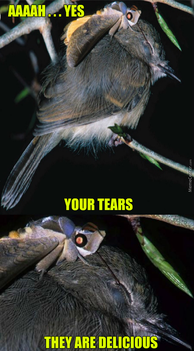 tear drinking moth is ready to for all your tears_o_4652099 tear drinking moth is ready to for all your tears by kr0ltad meme
