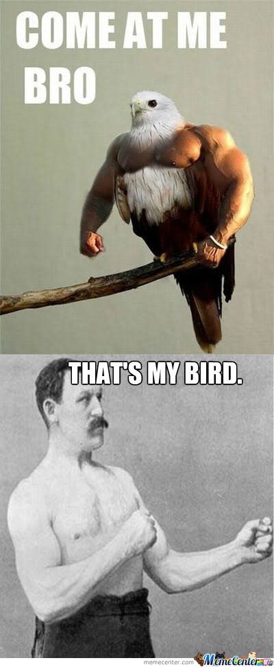 That's My Bird!