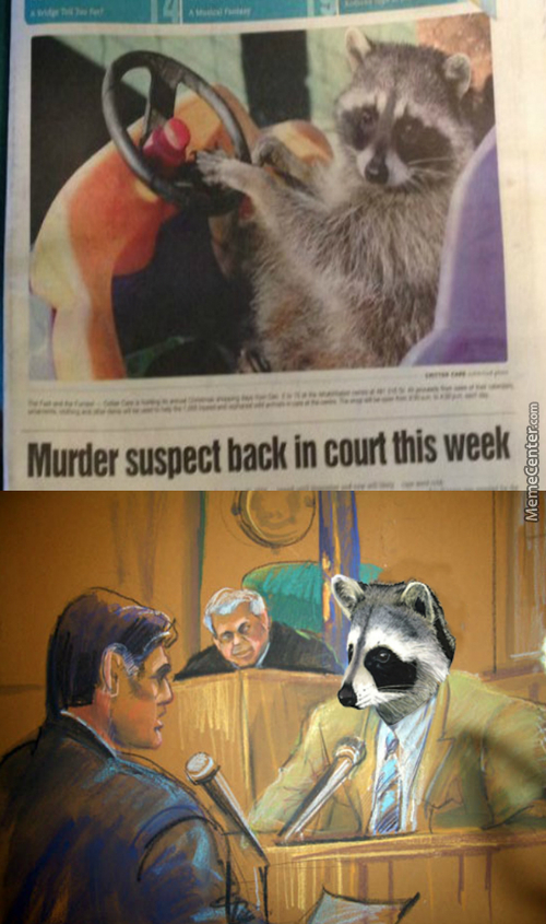 That Damn Raccoon Will Finally Pay For His Crimes Against Humanity