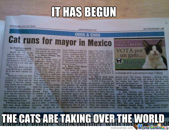 The Age Of Humans Is Ending, Cats Are The Future