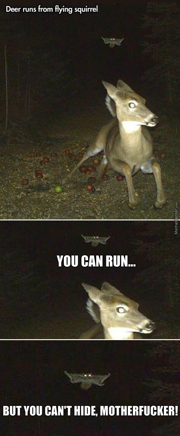 The Apples On The Ground Were A Clever Trap, Squirrel.