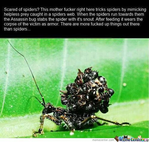 The Assassin Bug.