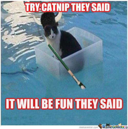 The Dangers Of Catnip