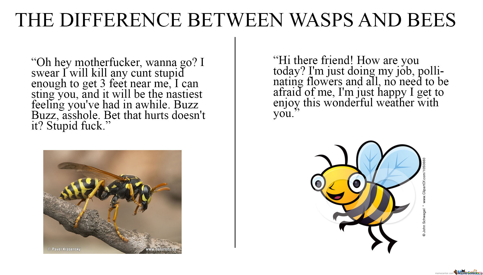 The Difference Between Wasps And Bees...