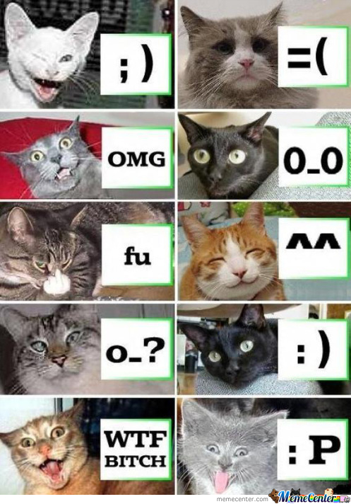 The Emotions Of A Cat