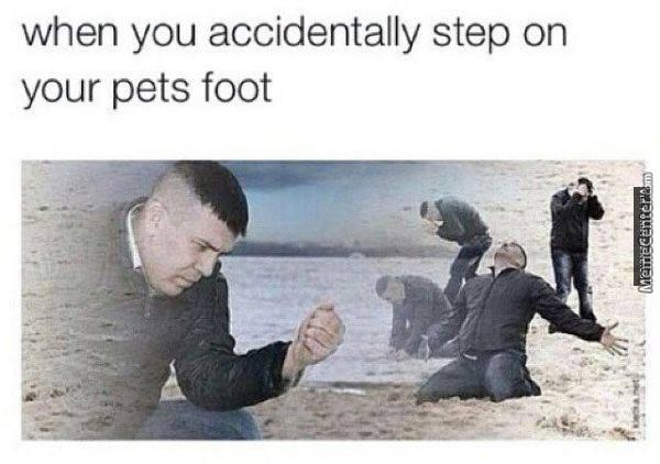 The Feels When Your Hurt Your Pets
