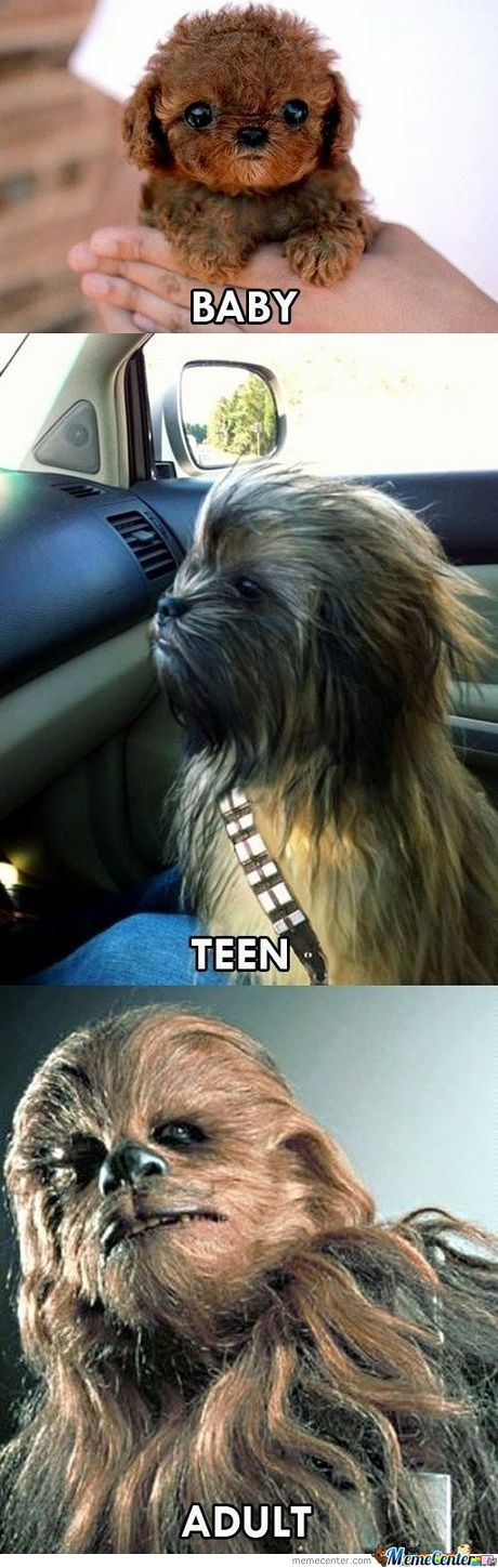 The Life Of Chewbacca