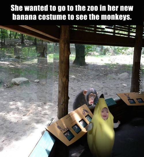 The Look On The Monkey's Face...