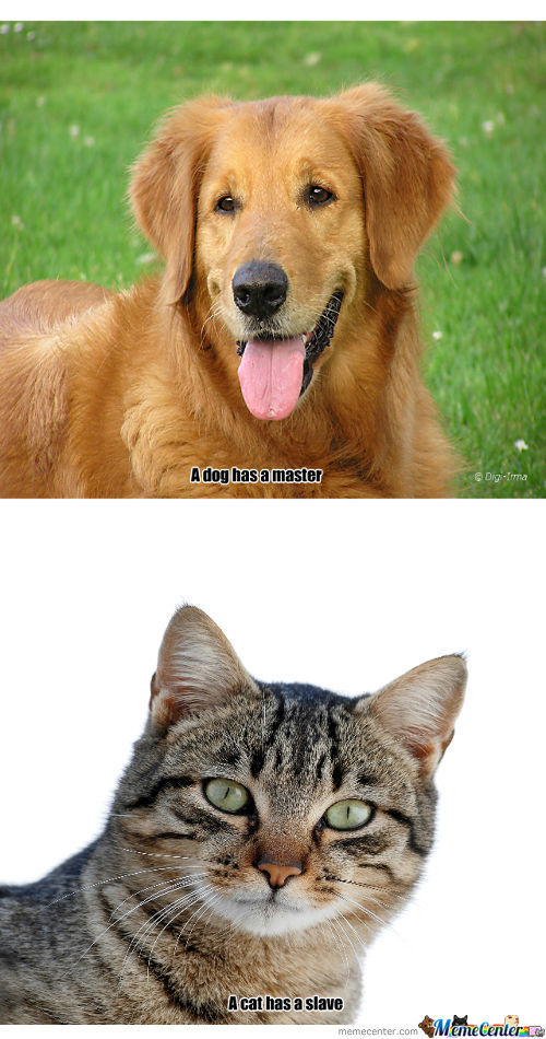 The Main Difference Between Cats And Dogs