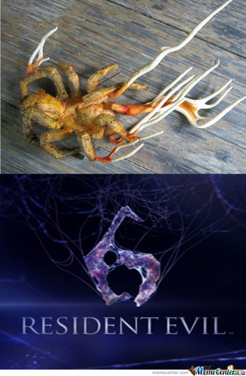 The Main Igrediant It The T Virus Is The Cordyceps Spore
