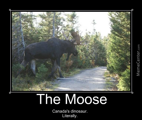 the majestic moose_o_4320135 the majestic moose by jeffreyharvey meme center,