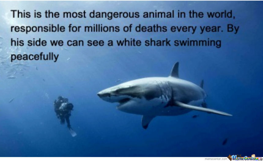 The Most Dangerous Animal On The Planet!
