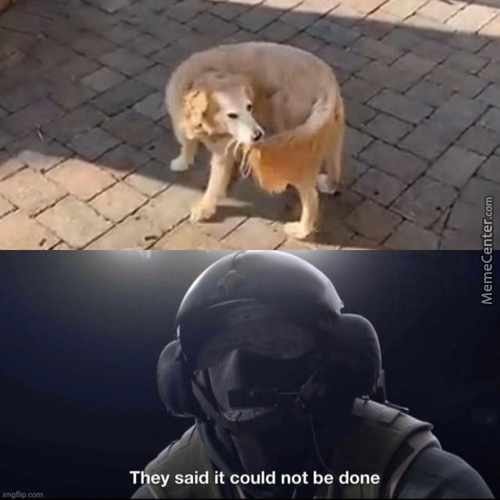 The Most Powerful Dog