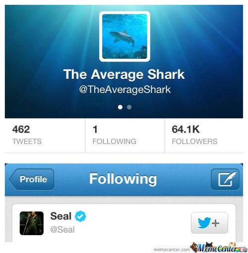 The Only Person The Average Shark Follows