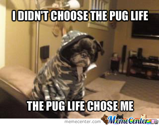 The Pug Life Is Difficult