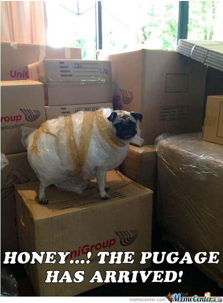 The Pugage Has Arrived!