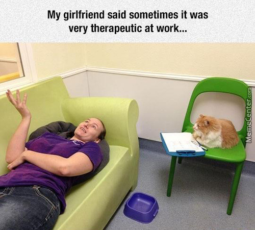 The Purrfect Therapist