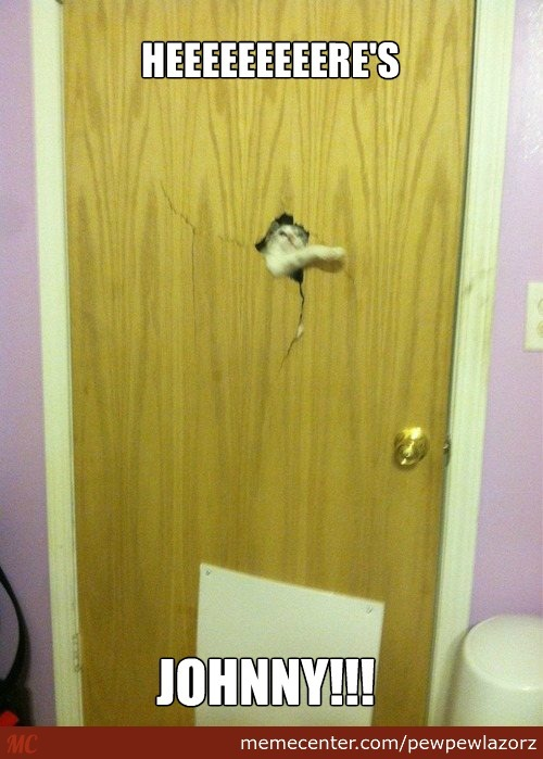 The Shining: Cat Edition