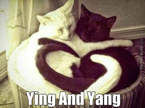 The Ying And Yang