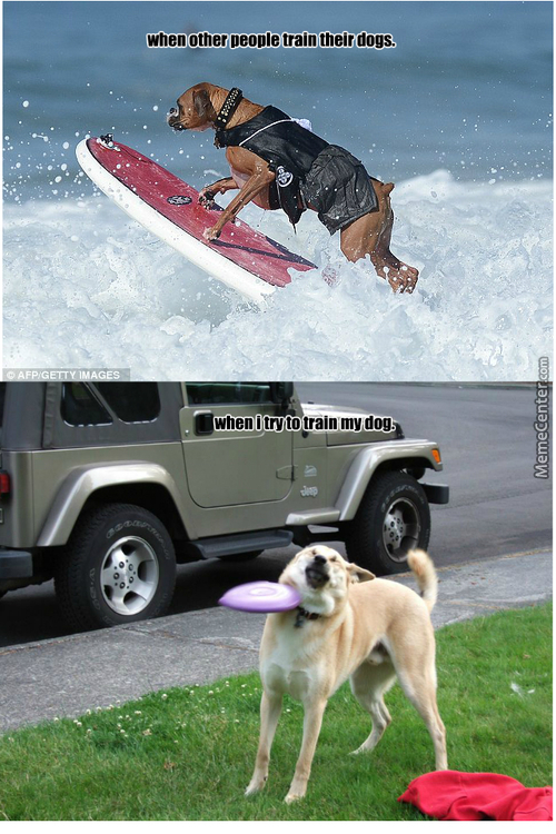 their dogs actually try mine won amp 039 t_c_2981285 dog frisbee memes best collection of funny dog frisbee pictures