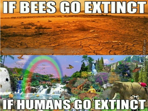 Then After Billions Of Years Of Evolution, Animals Discover Meme's And Deem Them God's Of The Past