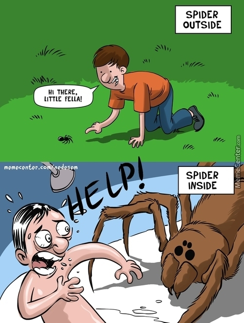 Theory Of Spider Relativity