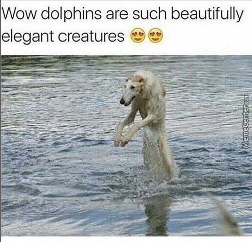 They Are Like The Dog Of The Sea