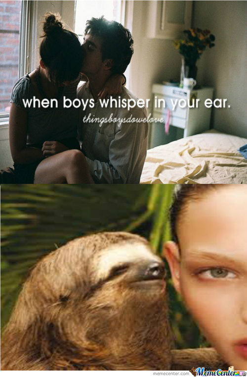 Things Sloths Do We Love
