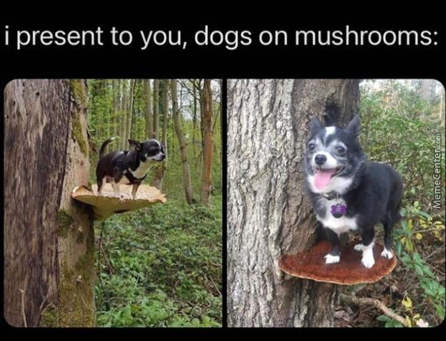 This Crazy Dog Is On Mushrooms