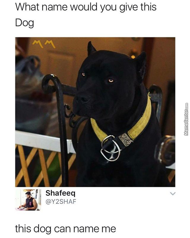 This Dog Can Name Me