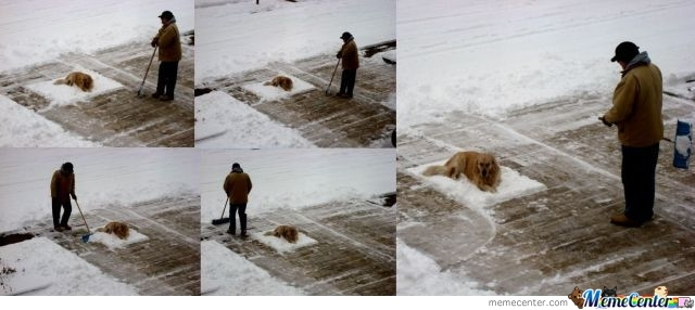 This Dog Simply Doesn't Give A F*ck